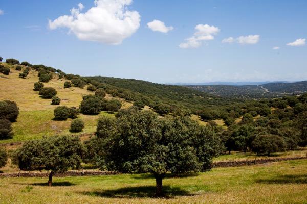 Dehesa, Korkeichenwald in der Extremadura