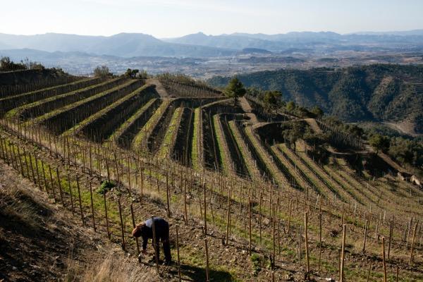 Weinanbau im Priorat