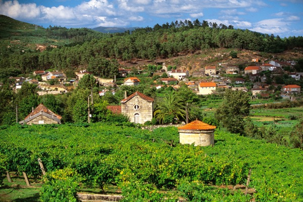Rias Baixas, Galiciens Vorzeige-Weingebiet