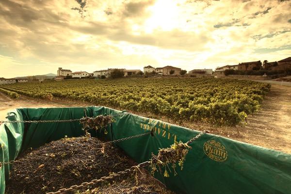 Weinanbaugebiete: Navarra