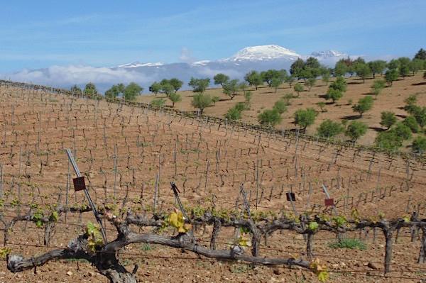 Weinberg von Barranco Oscuro, im Hintergrund der Mulhacen