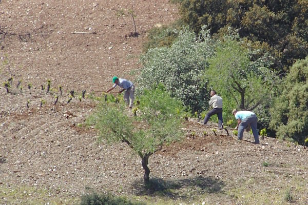 Feldarbeiter bei Barranco Oscuro