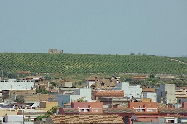 Weinfeld bei Sanlucar