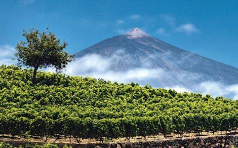 Pico de Teide mit Weinberg, Teneriffa, Kanaren
