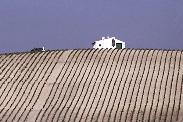 Albariza Boden in Jerez