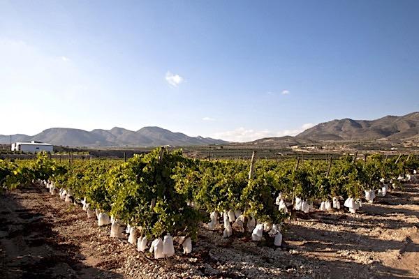 Mediterranes Klima: Weinlage in der DO Valencia