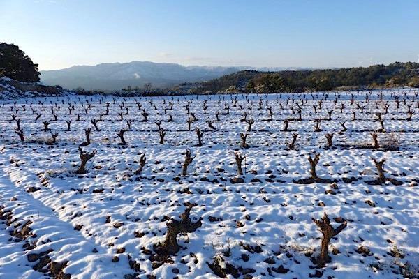 Celler Alimara, Terra Alta im Winter