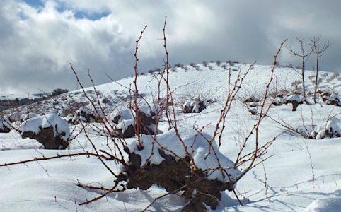 Bodega Garcia de Verdevique, Weinberg im Winter