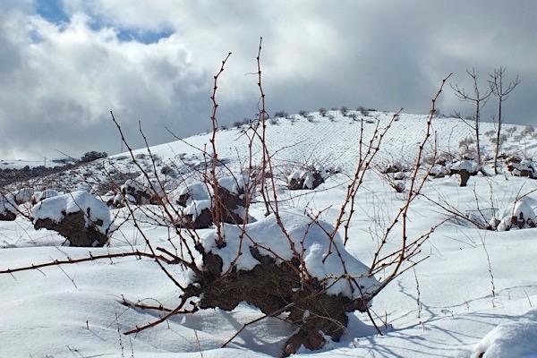 Bodega Garcia de Verdevique, Weinberg Winter