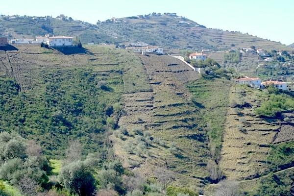 Weinlagen, Bodegas Almijara