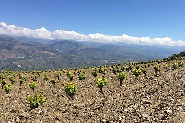 Weinlage in der Alpujarra-Contraviesa