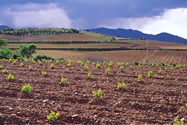 Garnacha Weinlagen in Carinena