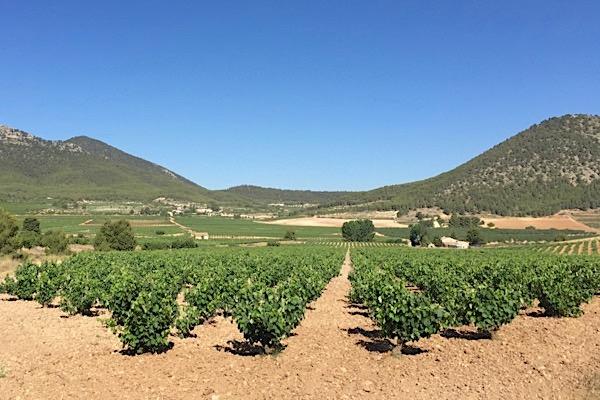Valle del Aceniche, Bullas