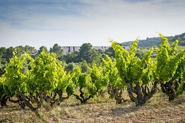 Weinberg, Herencia Altes