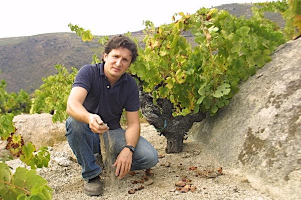 Rafael Palacios, Godello Rebstock