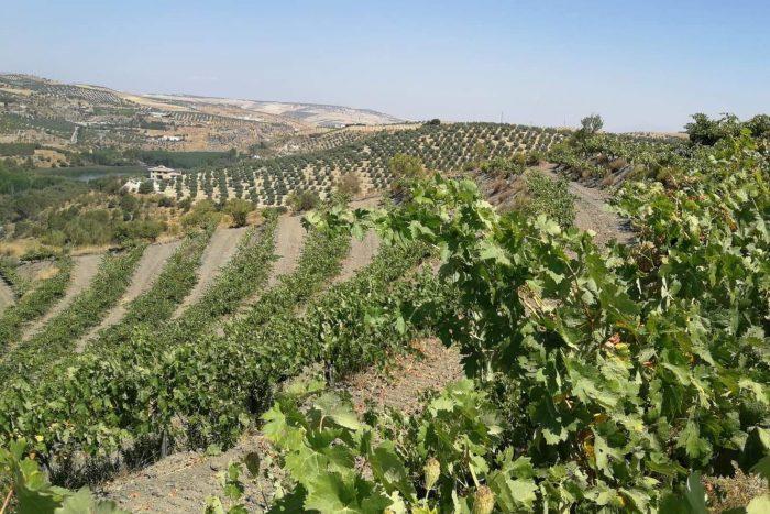Weinlage von Bodegas Fontedei in der Sierra de Tejeda