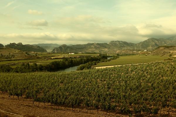 Weingebiete, Weinlandschaft im Rioja