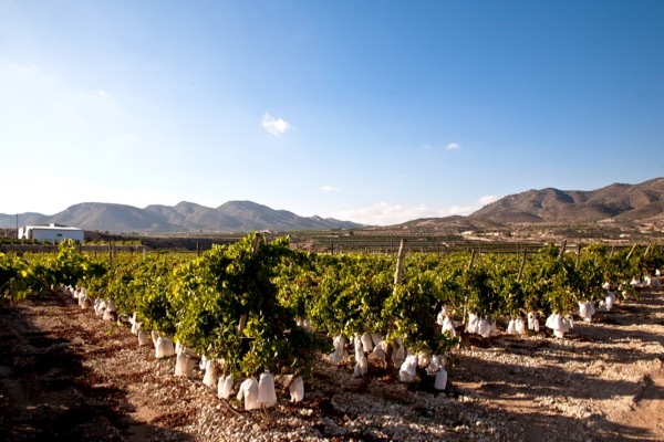 Weinregionen: in der D.O. Valencia