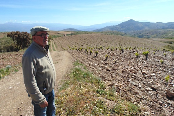 Manuel Valenzuela von Barranco Oscuro blickt auf seine Weinberge