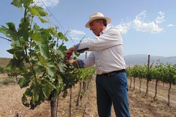 José Mendez Moya im Rebberg