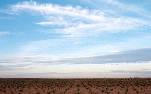 La Mancha, Weinfeld