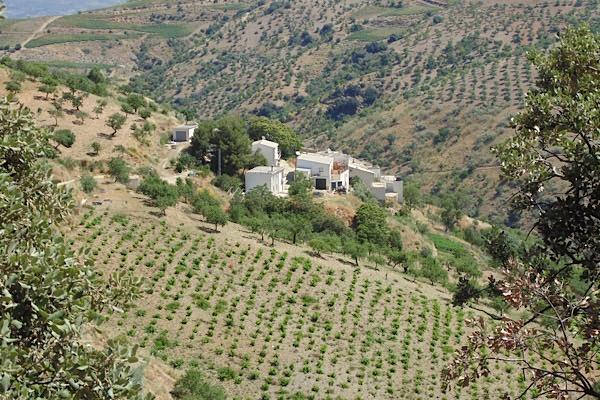 Bodega Garcia de Verdevique keltert exzellente Rotweine