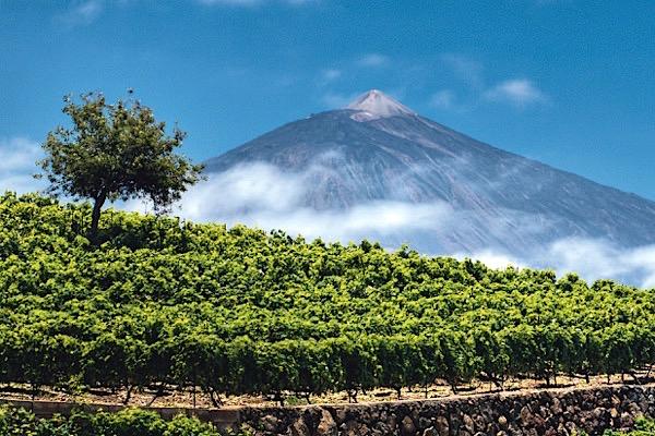 Berg Teide mit Weinfeld