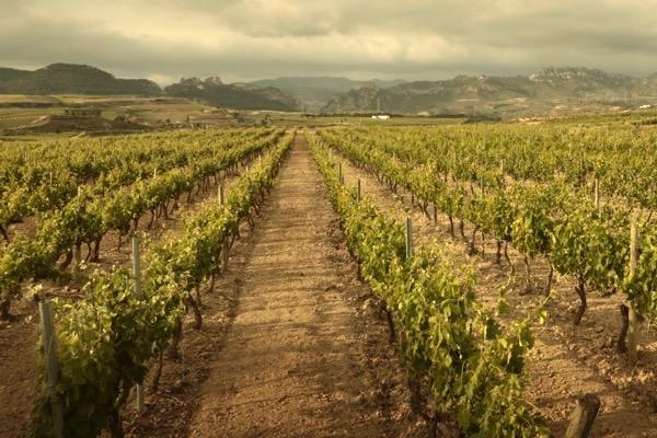 Böden, Kalk, Haro Rioja Alta