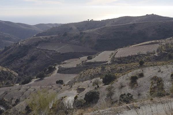 Blick auf Weinberge von Cuatro Vientos in Richtung Mittelmeer