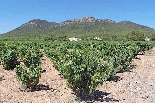 Bodega Balcona in Bullas