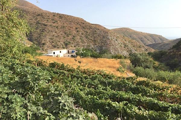Bodega Rambla Huarea