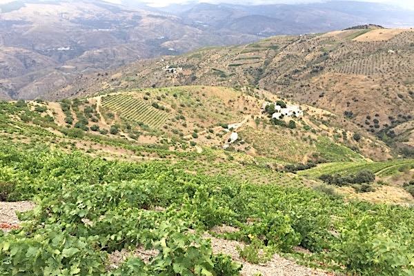 Garcia de Verdevique, Weinberg in Granada