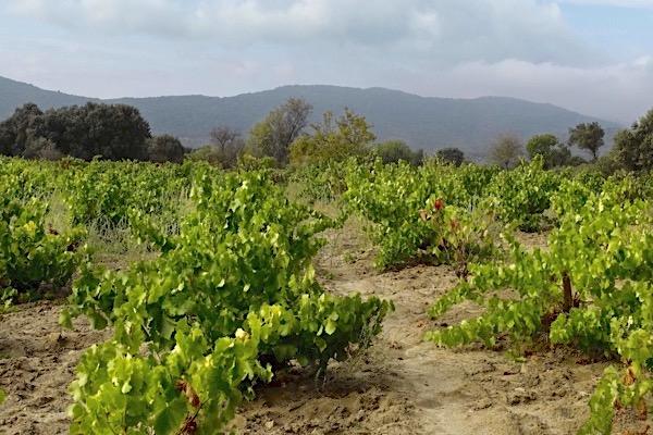 Weinberg von Bodega Luis Saavedra, Sierra de Gredos