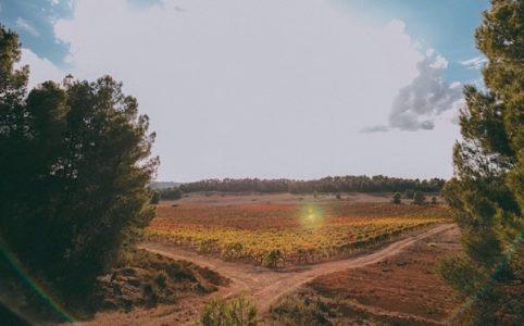 Pago de los Balagueses in Utiel-Requena