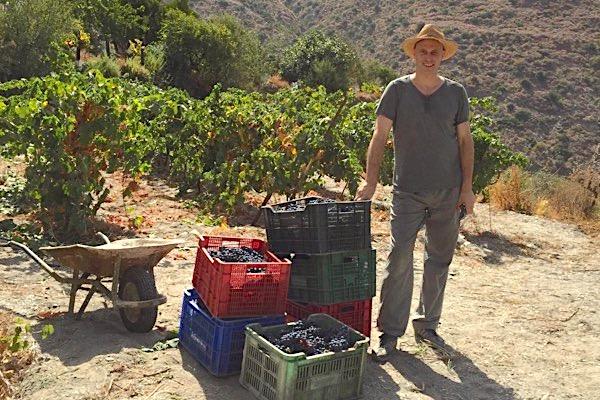 Bei der Weinlese in Andalusien