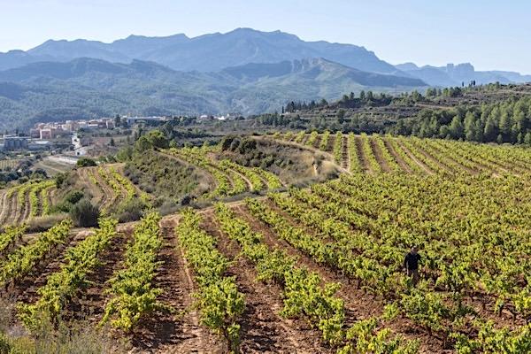 Weinreise Terra Alta