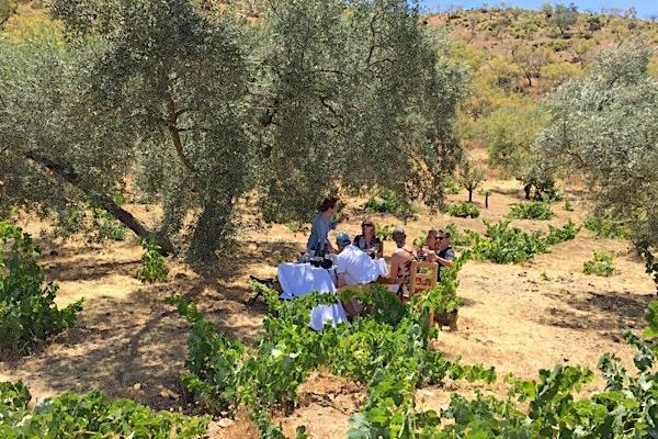 Weinprobe zwischen Olivenbäumen und alten Buschreben