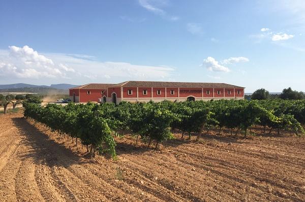 Das Weingut liegt auf 1070 m Höhe in der Provinz Cuenca.