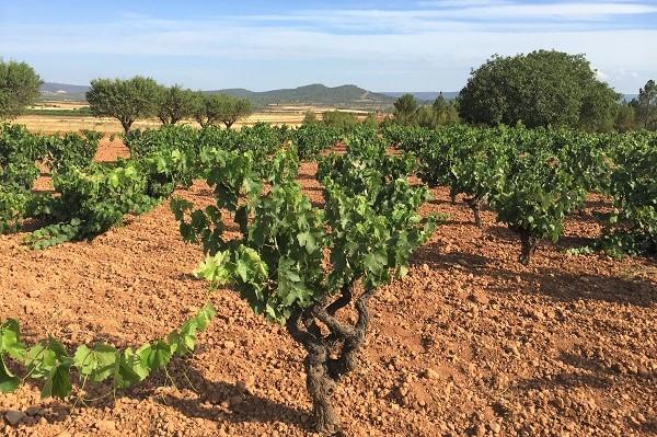 Weinreise Manchuela