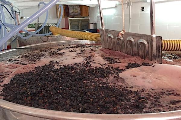 Maischegärung bei Rotwein
