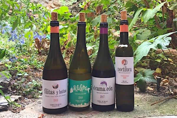 Weinlinie von Vinedos Verticales