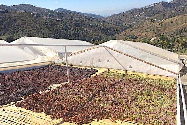 Asoleo bei Vinos Jarel in der Axarquia, eine Subzone der D.O. Málaga