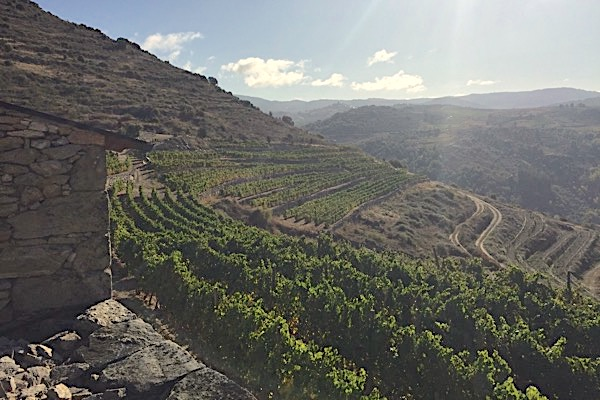 In Valdeorras: Um Erosion zu verhindern, sind die Weinlagen terrassiert.