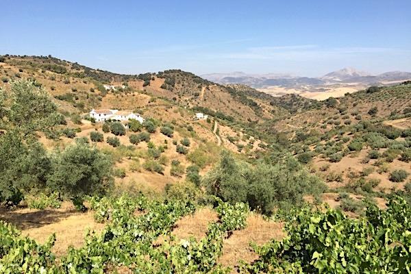 Weinreise Sierras de Málaga
