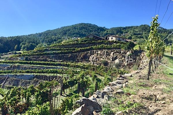 Weingut Fazenda Prádio in der D.O. Ribeira Sacra