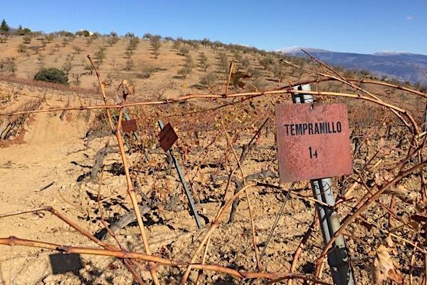 Weinbar von Barranco Oscuro. Diverse Reben im Anbau