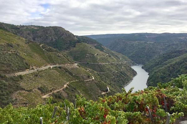 Steillagen am Fluss Sil in der D.O. Ribeira Sacra