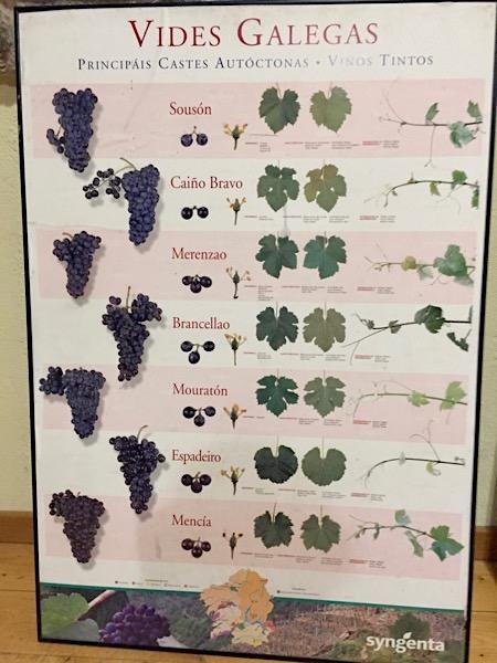 Autochthone Rotweinsorten Galiciens. Schautafel bei Ponte da Boga