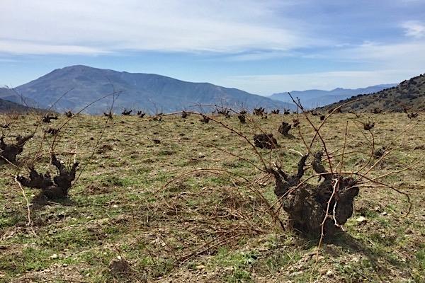 Weinlage bei Mecina, Sierra Nevada