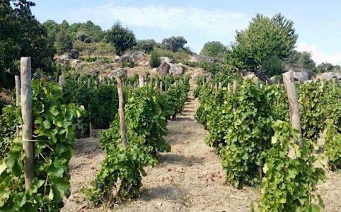 Weinberg Uvas Felices, Comando G, Sierra de Gredos